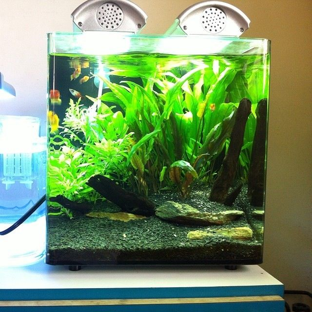 156 best images about planted nano aquariums on pinterest for Plante nano aquarium
