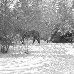 Sleigh Ride 2 by Mark Prest - Winter Fun!