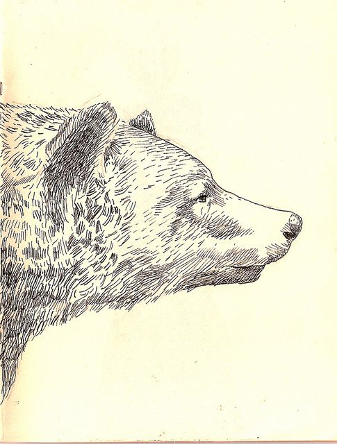 Bear drawing: Animal Art, Animal Prints Drawings, Bears Tattoo, Bears Sketch, Bears Drawings, Art Ideas, Bears Illustrations, Animal Sketch, Art Bears