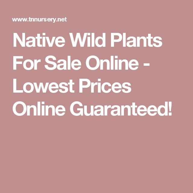 Native Wild Plants For Sale Online - Lowest Prices Online Guaranteed!