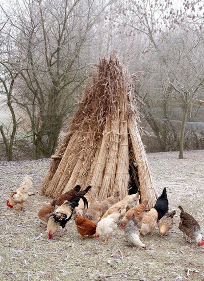 kippen-winter-riet