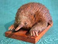 spiny anteater in D'Arcy Thompson Zoology Museum