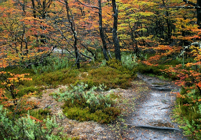 Fall colors in Tierra del Fuego