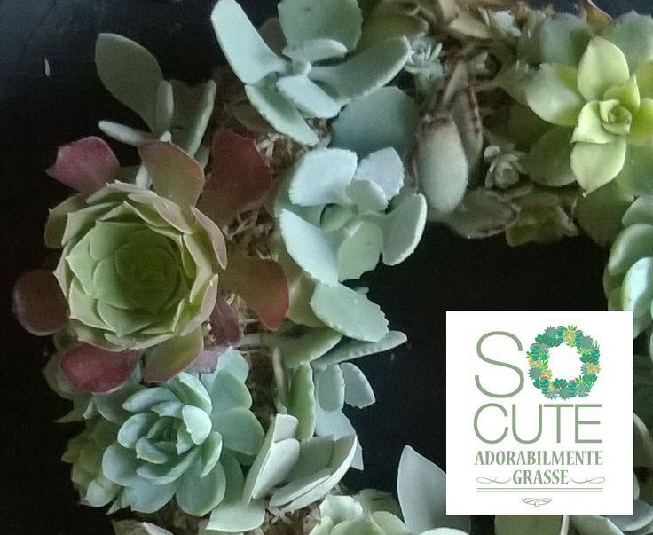 ghirlanda di piante succulente - il regalo vivo
