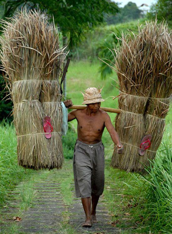 A Balinese Farmer ॐ Bali Floating Leaf Eco-Retreat ॐ http://balifloatingleaf.com ॐ