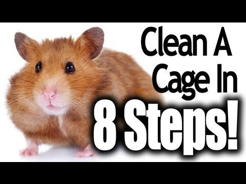 How To Clean a Hamster Cage (In 8 Easy Steps) - YouTube