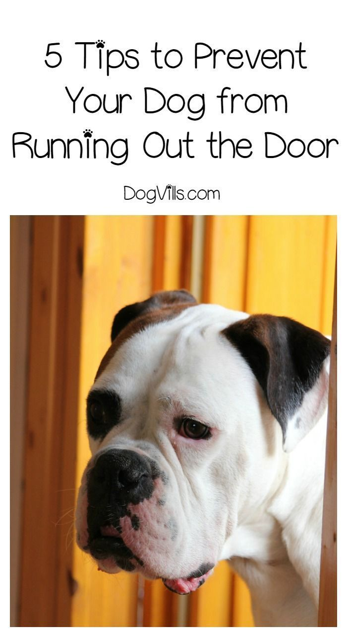 5 Training Tips To Stop Your Dog From Running Out The Door Dog