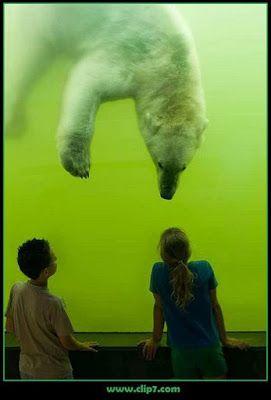 Fotos de Coleccion: Fotos de Coleccion: Oso polar nadando bajo el agua...