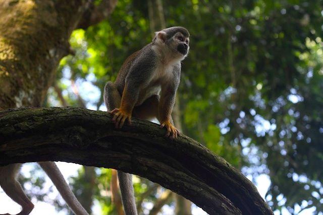 En los parques naturales es posible observar la majestuosidad de la fauna y flora amazónicas.