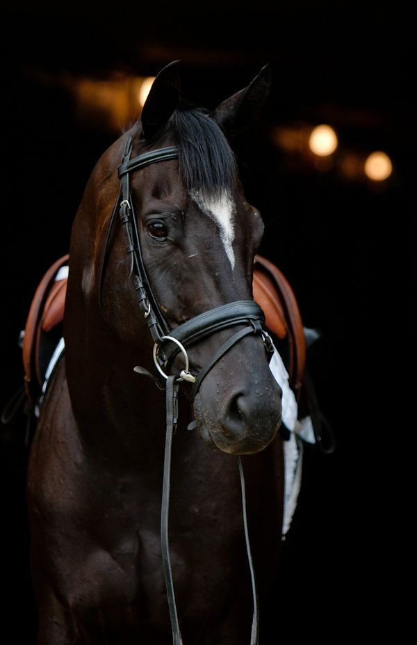 Isn't he just a beauty.  Would love to be able to buy this guy for my beautiful horse loving daughter!