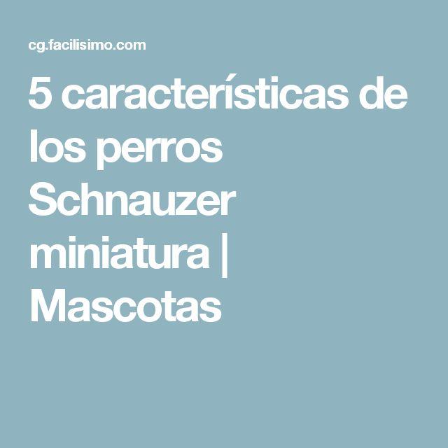5 características de los perros Schnauzer miniatura | Mascotas