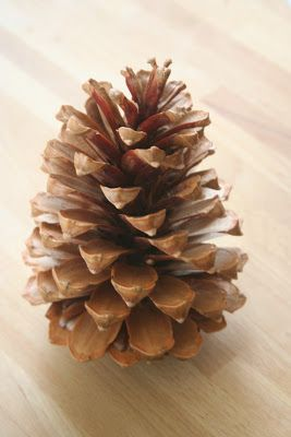 cute pine cone tree. (Need to hit translate first.)