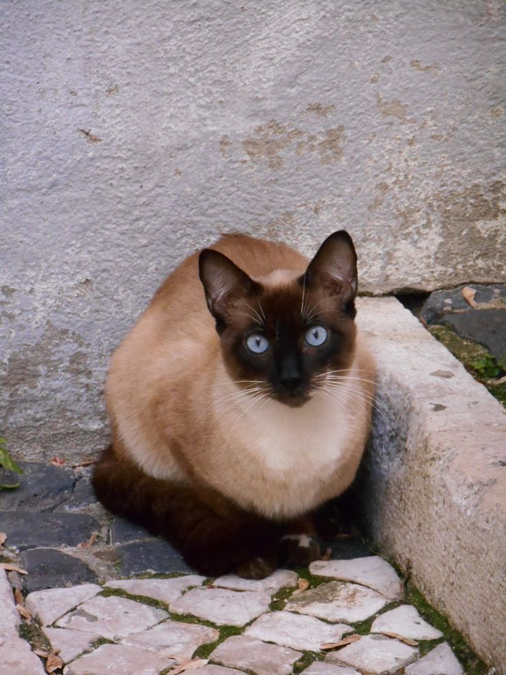 Cat in Alfama, Lisboa