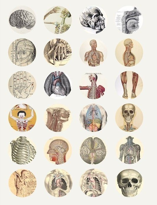 I fall to pieces vintage science human by VellasCollageSheets, $1.99