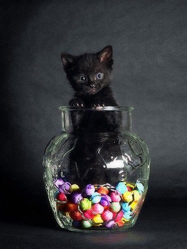 Sweet Tooth Fluff #cat: Candies Jars, Black Kitty, Halloween Candies, Candies Cat, Blackcat, Black Cat, Animal, Happy Halloween, Cookies Jars