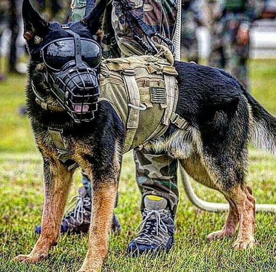 Geared Up Dog Soldiers