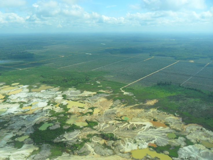 Lethal nature slowly and slowly-slowly, let's count down to the destruction and degradation of Kalimantan!