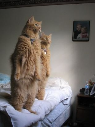 """How my cats stand every day to watch the birds."""