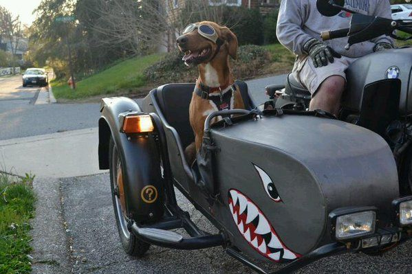 One cute sidecar passenger!