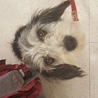 Woodbridge, Virginia - Terrier (Unknown Type, Medium). Meet Princess Virginia, a for adoption. https://www.adoptapet.com/pet/19589574-woodbridge-virginia-terrier-unknown-type-medium