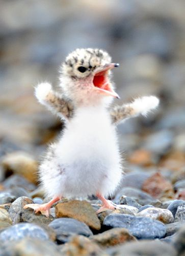 """""""I'm an eagle!"""""""