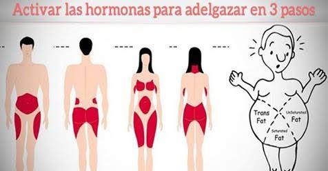 Aprende a activar las hormonas para adelgazar (bajar de peso)! | Mi Mundo Verde