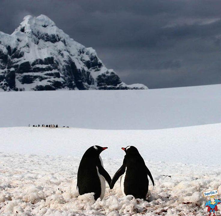 56 besten Pinguini ...meravigliosi e simpaticissimi;))) Bilder auf ...