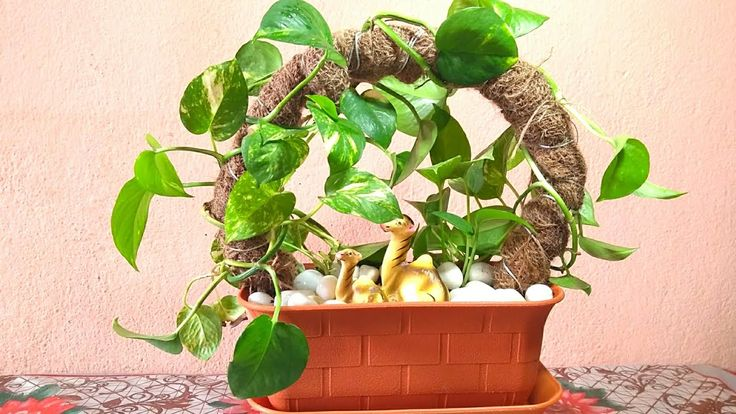 How To Grow Money Plant || Money Plant Growing Idea || Pothos Growing Idea – You… – House Plants
