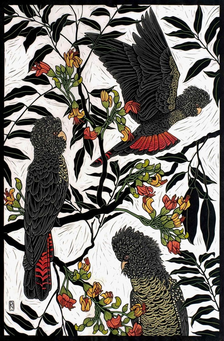 RED-TAILED BLACK COCKATOO 74.5 X 49.5 EDITION OF 50 HAND COLOURED LINOCUT ON HANDMADE JAPANESE PAPER $1,250