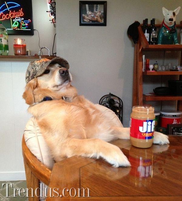 Bu köpek ne yapıyor