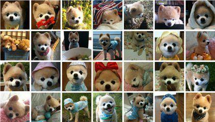 Do you know him, a dog star?