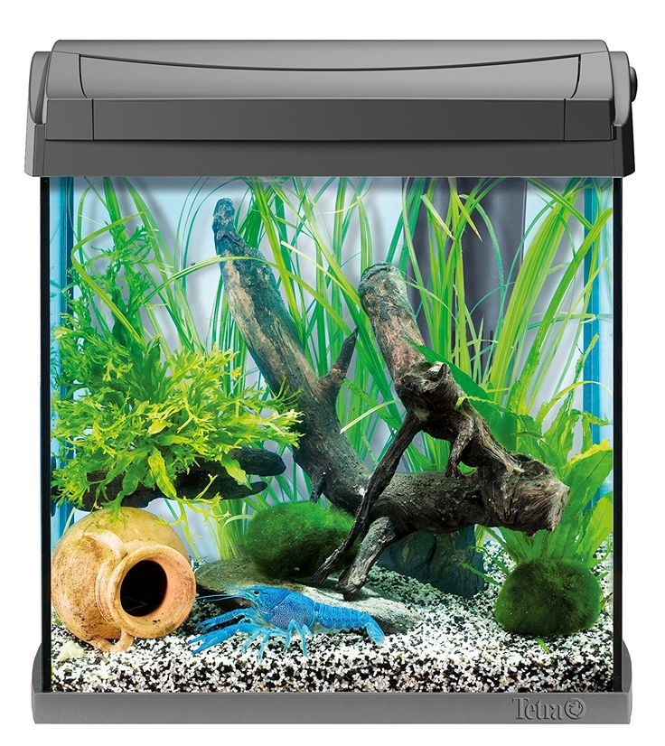 die besten 25 aquarium raumteiler ideen auf pinterest aquarium beckenacquarien und. Black Bedroom Furniture Sets. Home Design Ideas