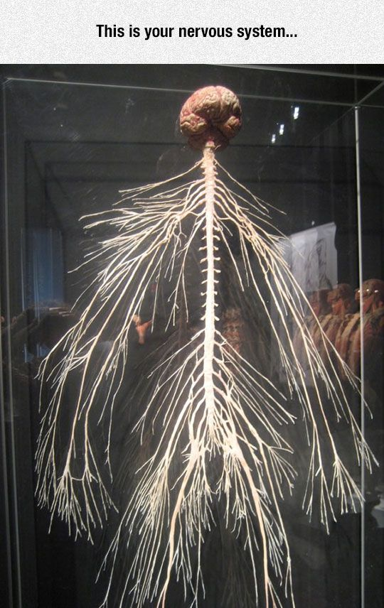 The Amazing Nervous System. No wonder we feel pain differently than non-Fibromyalgia peeps!