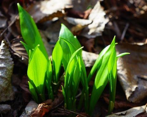 leaves-1025069_640