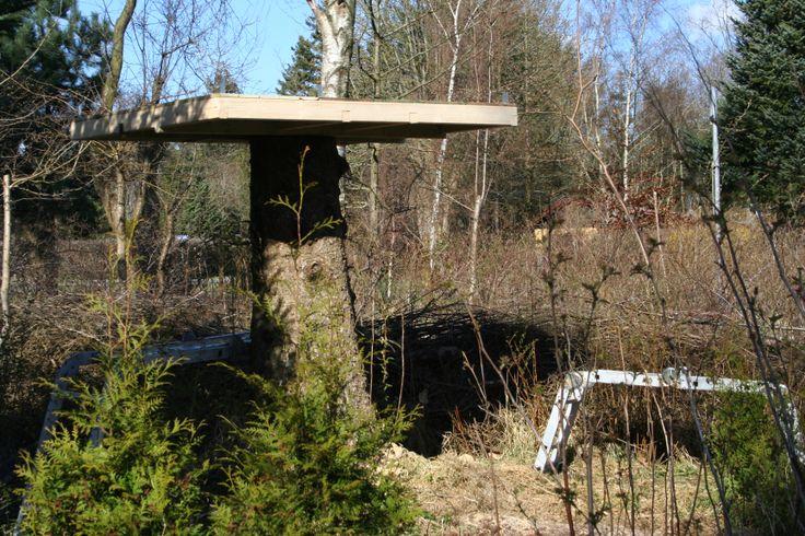 The magic tree house 2