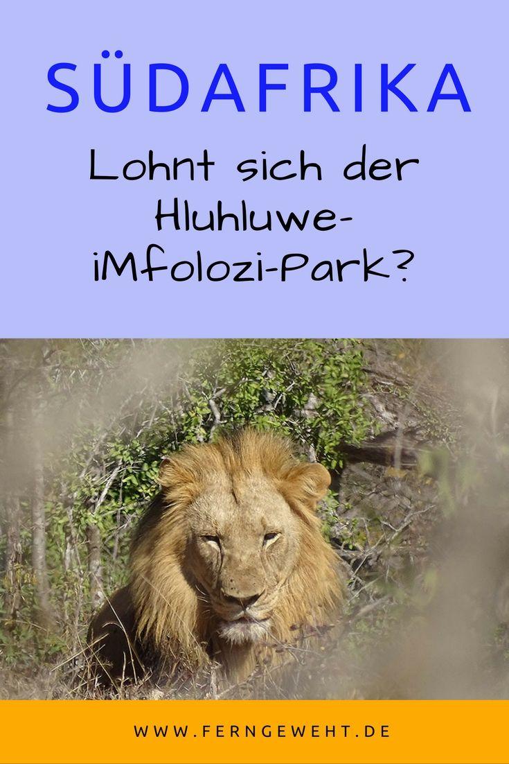Der Hluhluwe-iMfolozi-Park in Südafrika ist auf jeden Fall eine Reise wert. Viele Tiere warten auf die Besucher einer Safari.