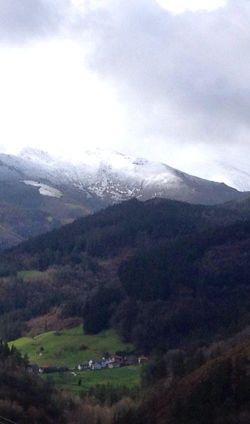 Yerbo Principado de Asturias  SPAIN. #CaLulon