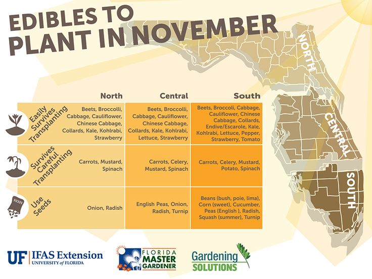 Florida Edible Vegetables to plant in November Fall, in north, central or south Florida. This site is WONDERFUL - so many great graphics like this one!