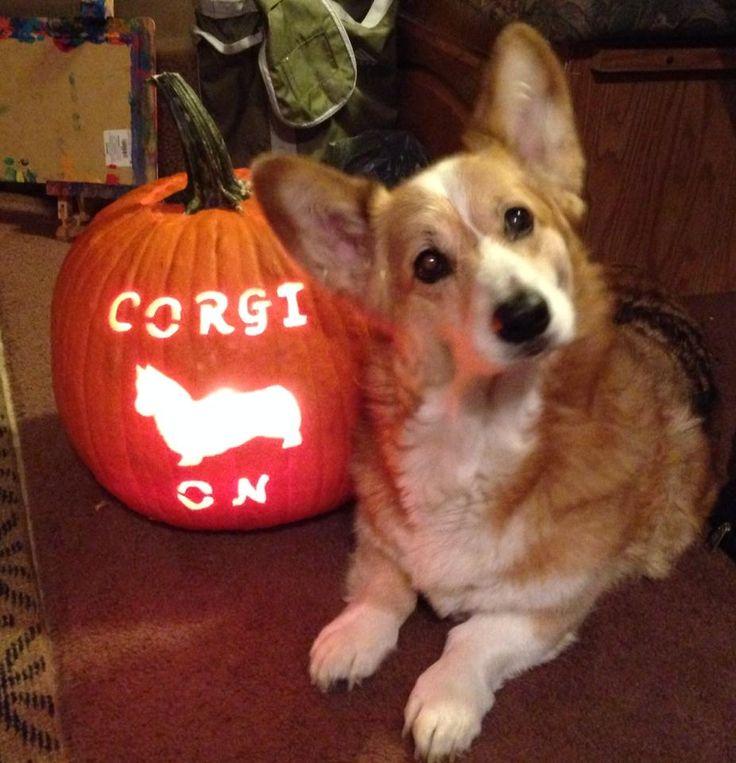 Corgi on! Omg this is my friend's corgi Tank!! He passed away, he was so freaking cute!!