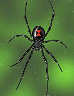 102 Wicked Things To Do-beaded spiders