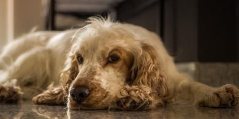 4 Potential Causes of Pet Ear Problems And How Veterinary Dermatology Services Can Help