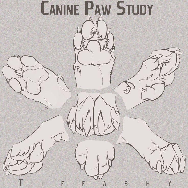 Canine Paw Study/Angles/Tutorial by TIFFASHY.deviantart.com on @DeviantArt