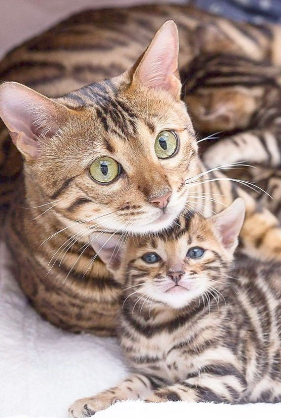 Cutest Kittens In The World 2018 My Cutest Kittens Book Those Cute Animals Images In Hd Outside Cute Animals To Draw Pretty Cats Cute Animals Cats And Kittens