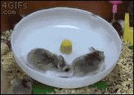 Hamsters learning about the wheel the hard way: | 29 GIFs That Will Make You Die Of Laughter Every Time You Watch