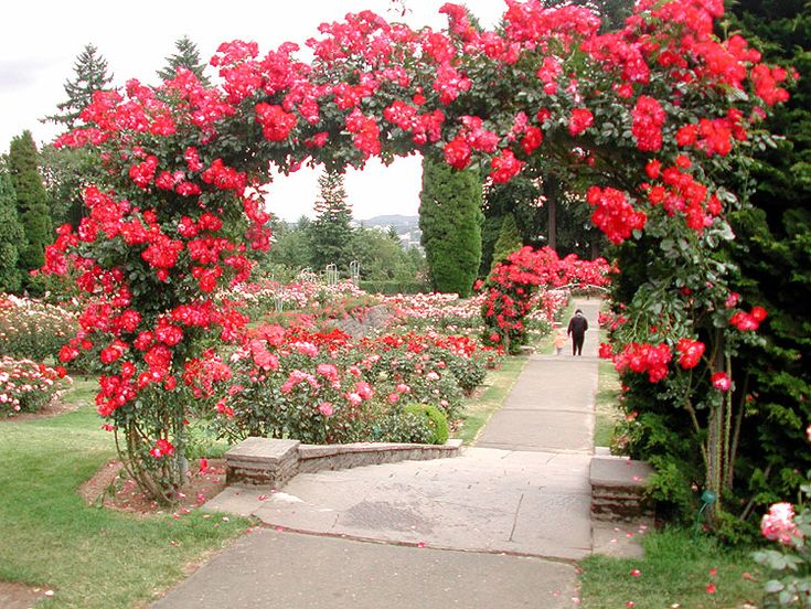 portland rose garden 3 rose garden portland oregon