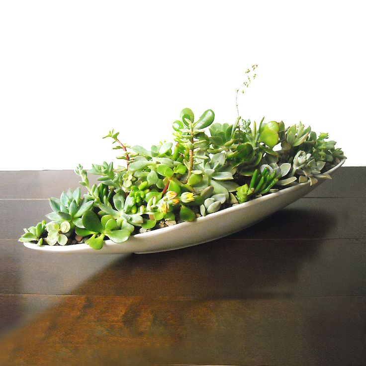 @Ruthann Uithol we could def do this! Modern Succulent Centerpiece | dotandbo.com