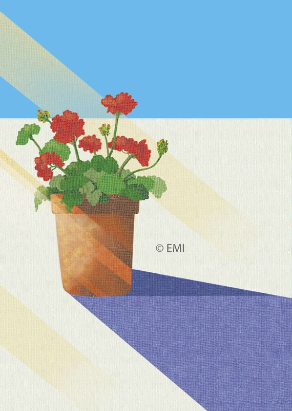 geranium | digital illustration by EMI 2015
