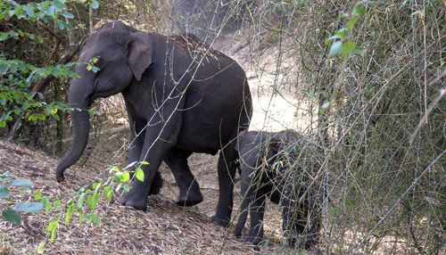 Petición · PLEASE STOP THE CAPTURE OF WILD ELEPHANTS IN INDIA.SAVE ELEPHANTS · Change.org