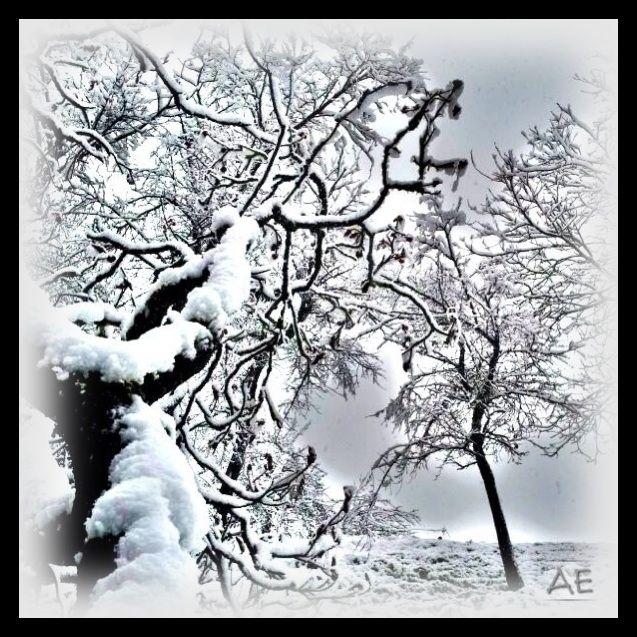 Snow by AngelEowyn