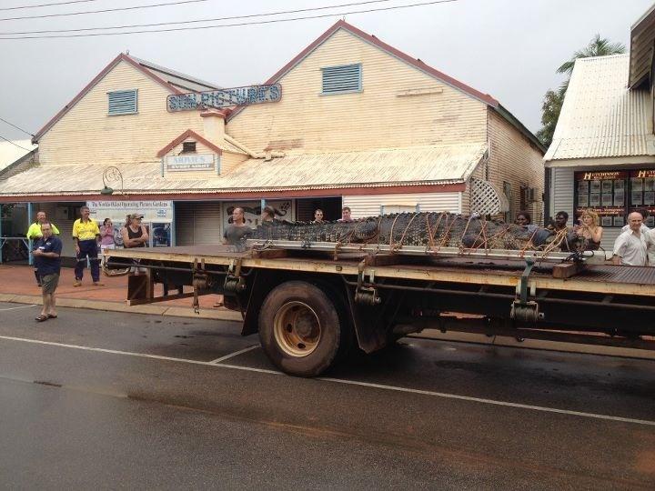 Mr Crocodile moving to a new home, Broome Australia